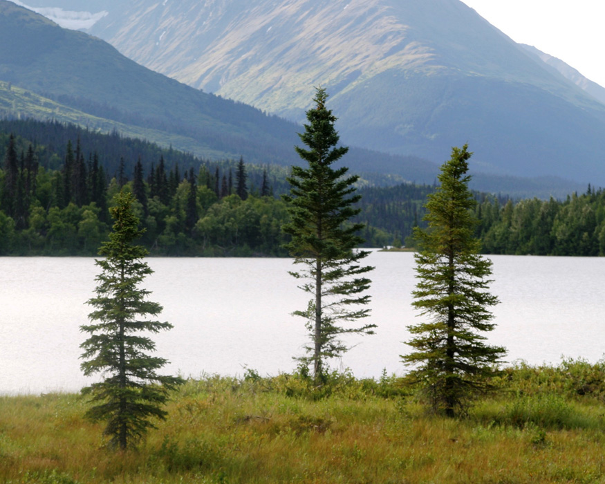 three trees near lake with mountains in background in Alaska