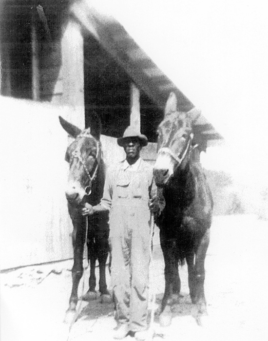 grandfather - man with 2 horses