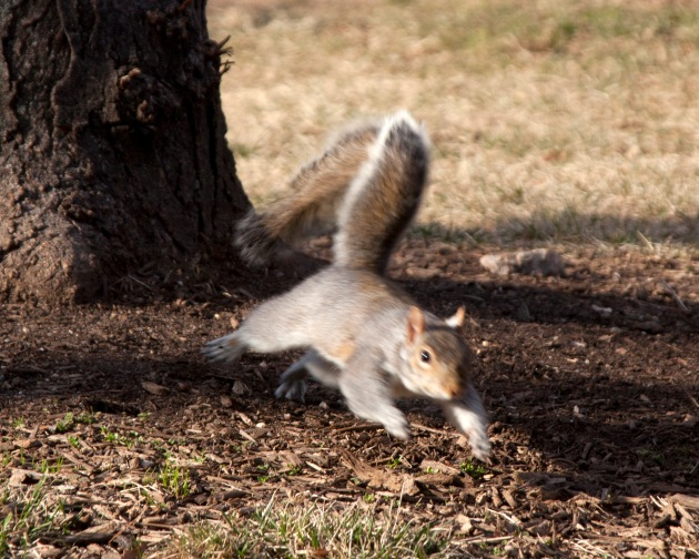 squirrel running and playing